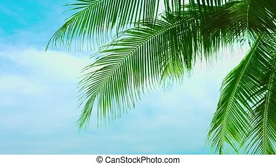 Leaves of a coconut palm tree against a beautiful sky -...