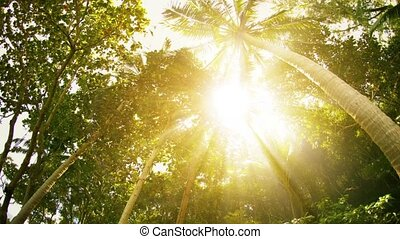 Sun rays through the tropical trees and palms - Video 1080p...