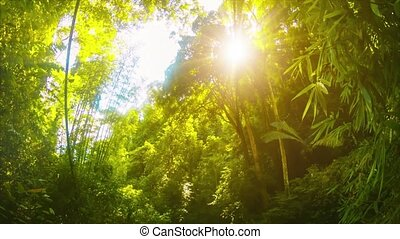 Afternoon Sun on the Jungle in Thailand - Video 1080p -...