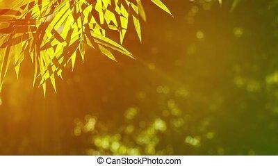 Bamboo Leaves in Golden Sunlight