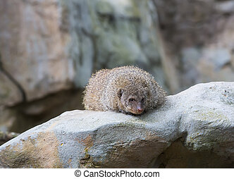 mongoose in the wild national nature nobody