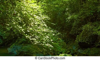 Stream and Rainforest Canopy in Southern Thailand -...