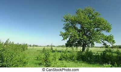 Refreshing Breeze Stirs Tree Leaves in a Meadow - Video...
