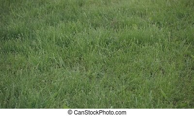 Closeup of Football Rolling Into Frame on Grass