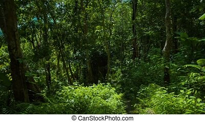 Upward Tilting Shot of Jungle Foliage and Trees - Video...