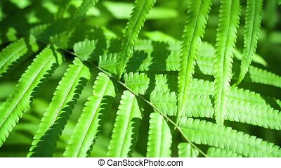 Closeup Tracking Shot of Wild Fern Leaves in Asian...