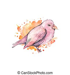 Illustration of hand drawn bird, watercolor style