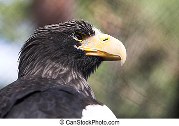Sea eagle sitting in the zoo cage