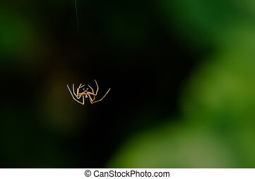 Single Small spider falling mid-air