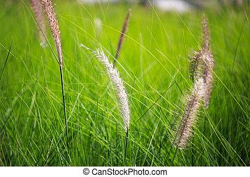 blow white flower grass