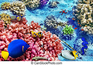 Underwater world with corals and tropical fish - Wonderful...