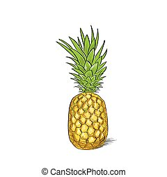 pineapple fruit color sketch draw isolated over white...