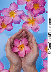 Hands and Frangipanis in a Spa Pool - Womans hands cupping a...