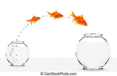 three goldfishes jumping from small to bigger bowl isolated...