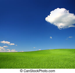 green hill with wheat under blue sky