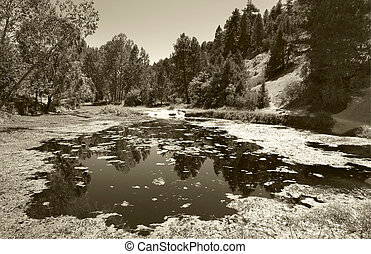 Landscape with pond and pine forest in Spain Sepia tone...