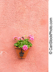 Colorful flower pot on wall