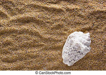 Seashell on a background of sand