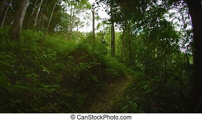 Running on a forest path on a sunny day. Thailand, Phuket -...
