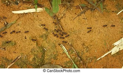 Termites on the ground in a tropical forest of Thailand -...