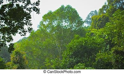 Tropical rain above the forest - FullHD video - Tropical...