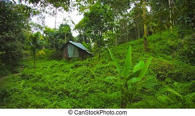 Hut in the rainforest on the hill Thailand, Phuket - Video...