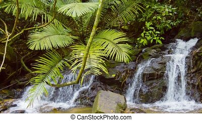 Waterfall in the Jungle (with sound) - Video 1080p - Small...