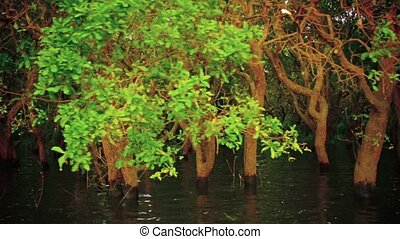 Cruising Through a Mangrove Forest in Cambodia - Local boat...