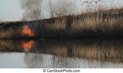 Burning Dry Reeds by the River on a Sunny Spring Day,...