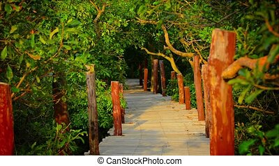 Elevated Walkway through the Mangrove Forest - Video 1080p -...