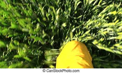male leg walk crop field - male legs with waterproof yellow...