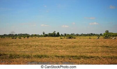 Farm Land from the Window of a Train in Cambodia - Video...
