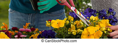 Horticulturists planting flowers - Close-up of...