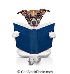 本, 読書, 犬
