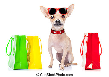 shopping dog - chihuahua dog with shopping bags ready for...