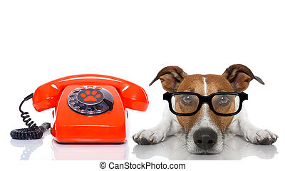 dog on the phone - jack russell dog with glasses as...