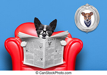 dog reading newspaper - terrier dog reading newspaper on a...