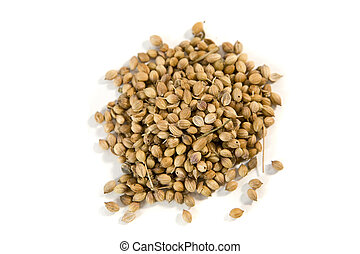 coriander seeds - Heap of coriander seeds isolated on white...