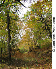 mellow autumn, landscapes, background, wood, trees, reserved...