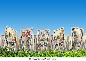 One hundred dollar banknotes growing from green grass. Money...
