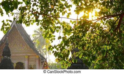 Panning Shot of Buddhist Temple in Luang Prabang, Laos -...