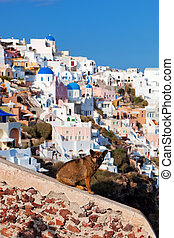 Homeless stray dog sitting on stone wall in Oia town,...