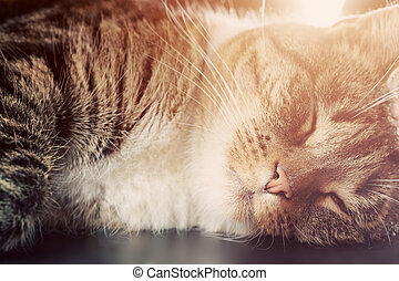 Cute small cat sleeping. Happy expression