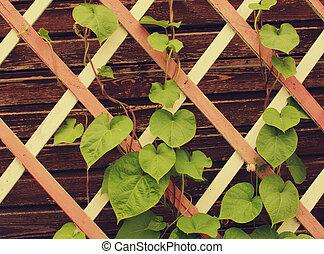Stockfoto 39 s van latwerk pergola garden pergola met wijngaarden csp4072503 zoek naar - Latwerk houten ...