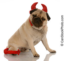 pug dog with sour expression dressed up as a devil