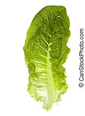 Romaine Lettuce Isolated - Isolated macro image of a romaine...