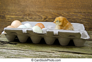 chick in egg carton - Baby chicken in an egg carton with...