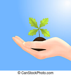 Oak Sapling in Hand with Blue Sky - Illustration of an...