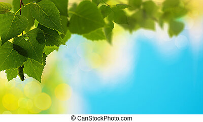 Summer forest, abstract natural backgrounds for your design