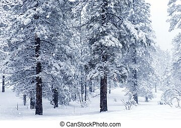 Forest Under Heavy Snow